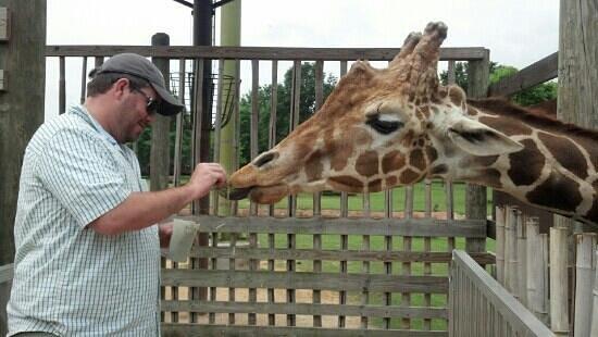 Montgomery, AL: my husband feeding the giraffe