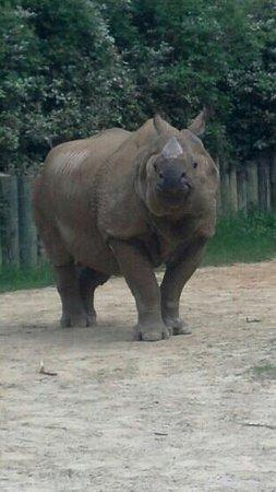Montgomery, AL: a happy rhino