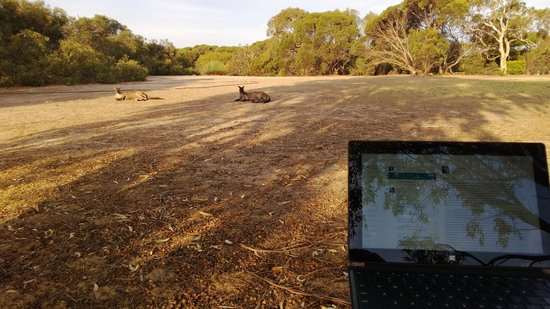 Vivonne Bay Lodge: Working my MS Surface wth the Roos!