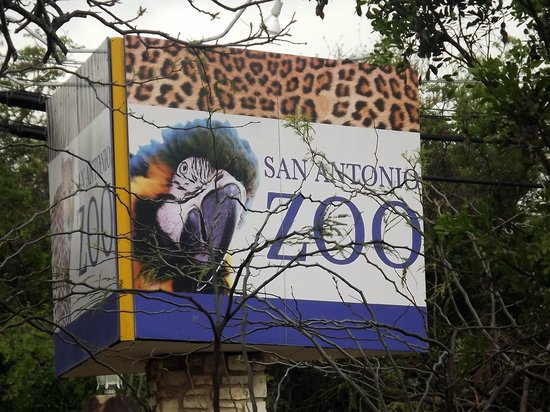 San Antonio Zoo Picture Of San Antonio Zoo San Antonio