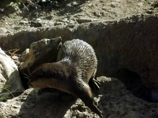 San Antonio Zoo : ANIMALS