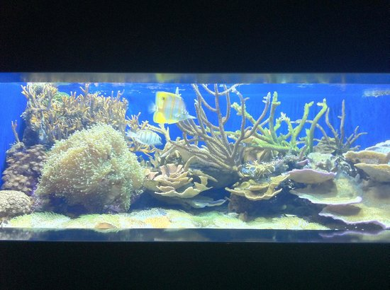Steinhart Aquarium: Shiny view