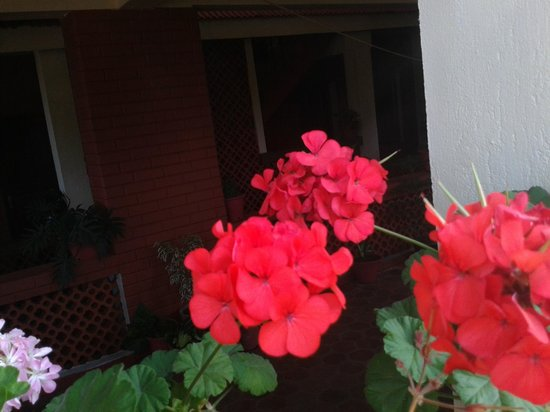Ambika Homestay: the flowering plants in the sit out