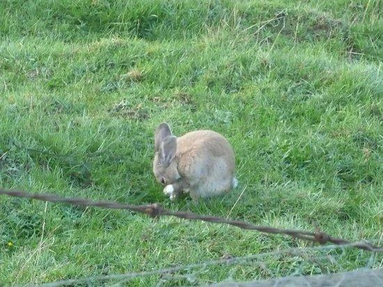 A Kiwi Farmstay 사진