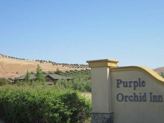 The Purple Orchid Wine Country & Spa: View of property