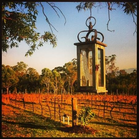 Spicers Vineyards Estate : Vineyard