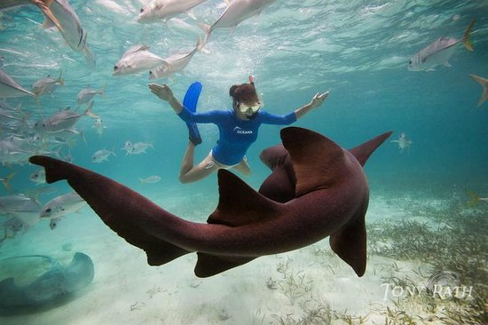 Dive With Nurse Shark In Cozumel Picture Of Cozumel Cruise Excursions Private Tours Cozumel Tripadvisor