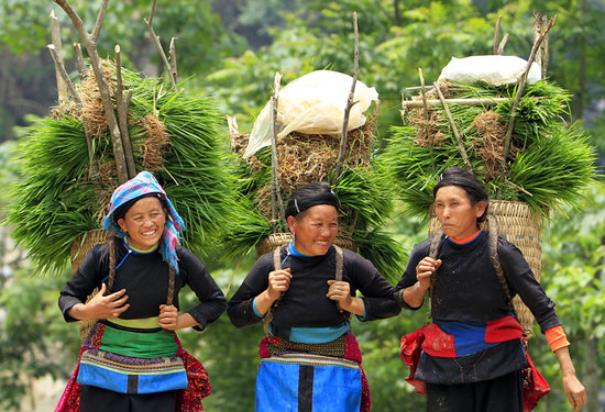 Ha Giang Trekking - Day Tours