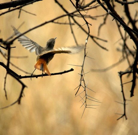 Sultanpur National Park Bird Sanctuary: 3