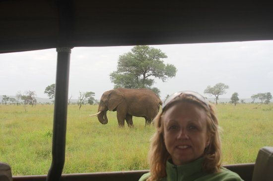 Royal Kruger Lodge: Elephant on safari