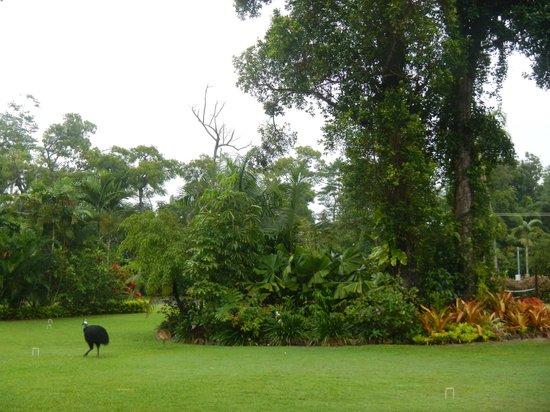 Hibiscus Lodge: 100 %ige Chance die seltenen Cassowaries zu sehen
