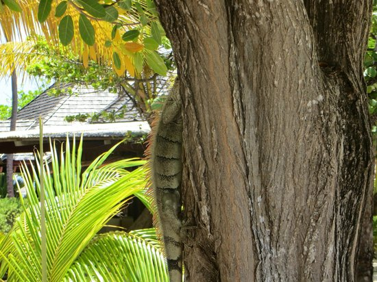 Palm Island Resort & Spa : Playing Hide-n-Seek