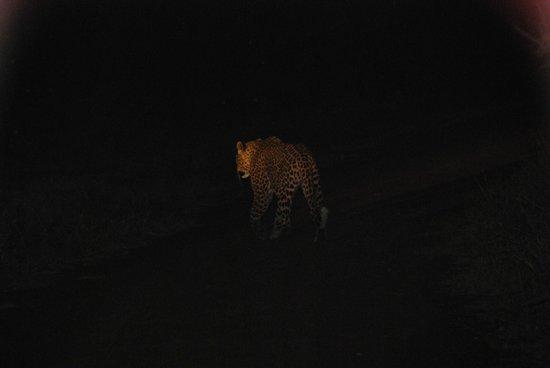 Morukuru Family Madikwe: Leopard