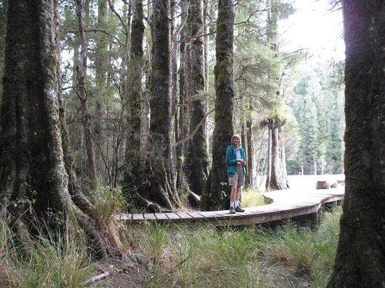 Whirinaki Rainforest Experiences - Day Tours: lake loop