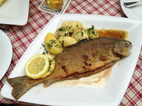Bischofshof am Dom: trout