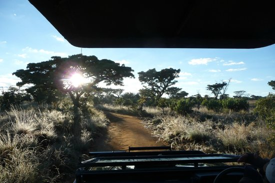 Wild Ivory Eco lodge: During Morning Game Drive