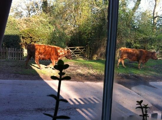 Wych Green Cottage: view from kitchen