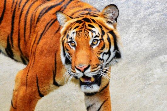 Tampa's Lowry Park Zoo: beautiful