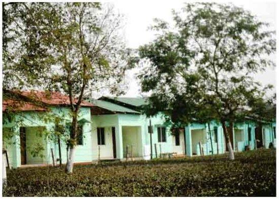 Jaldapara Wildlife Sanctuary Photo