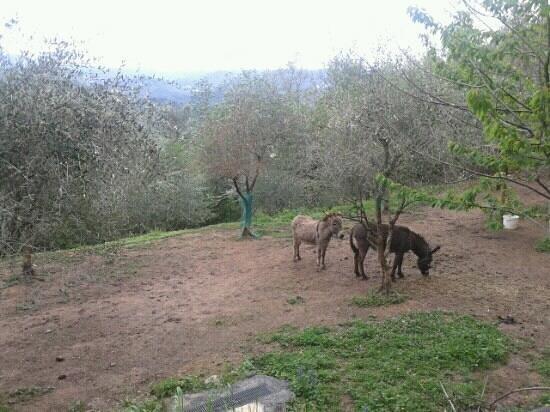 GLI ASINI DELL'AGRITURISMO GARUMBA