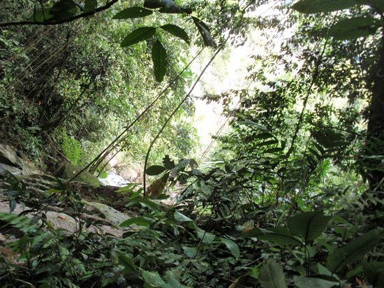 Sungai Lembing, Malaysia: some jungle trekking