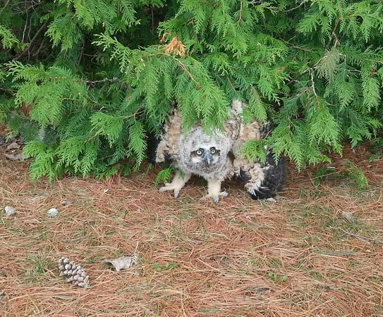 Earl Rowe Provincial Park: Owl angry with us..Freaky!