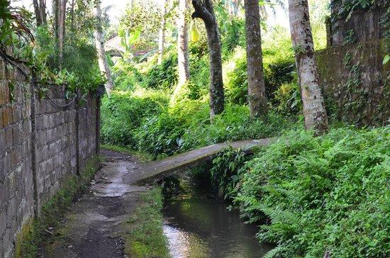 Mulawarman Ubud Bali: Walk to Mulwarman