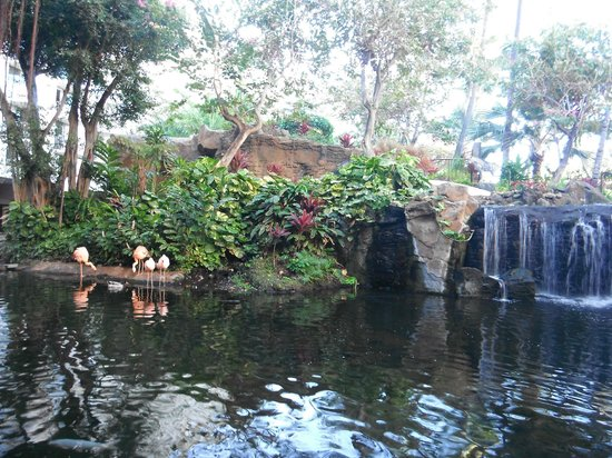 The Westin Maui Resort & Spa: Another view of flamingos and waterfall near relaxing breakfast area