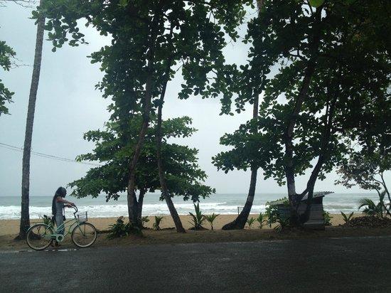 Paradise Island Lodge : Vista de la playa Cocles, cruzando la calle
