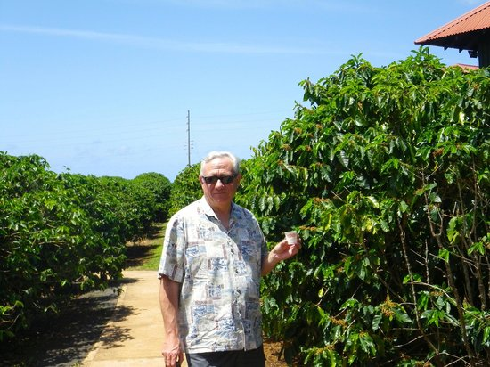 Kauai Coffee Company: Enjoying Coffee while doing the tour.