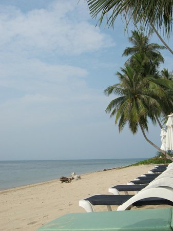 Centra Coconut Beach Resort Samui: hotel