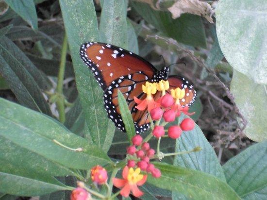 Homosassa Butterfly: Butterfly House