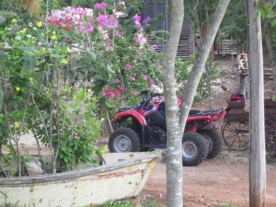 Ecopark Xtut: ATVs