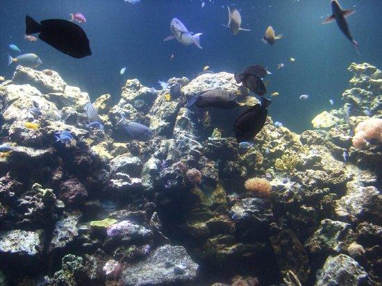 Rote Quallen Picture Of Virginia Aquarium Marine
