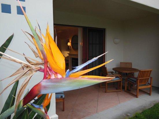 Four Seasons Residence Club Aviara: Landscaping around terraces