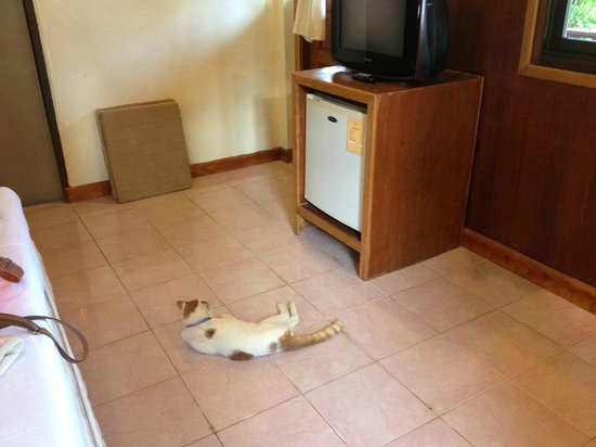 Grand Sea Resort: Cat came with the room