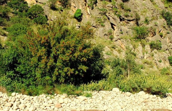 Canan Holiday House: Riverbed