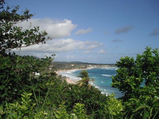 Pimento Lodge Resort: Long Bay