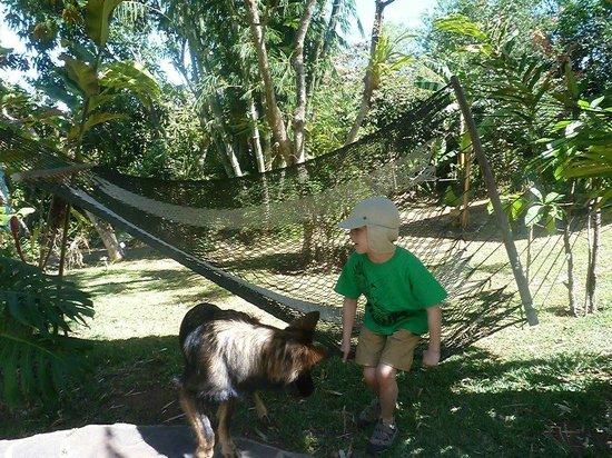 Pura Vida Hotel: We enjoyed the gardens.