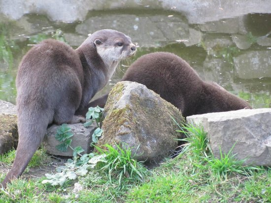 Sparkwell, UK: Enchanting otters