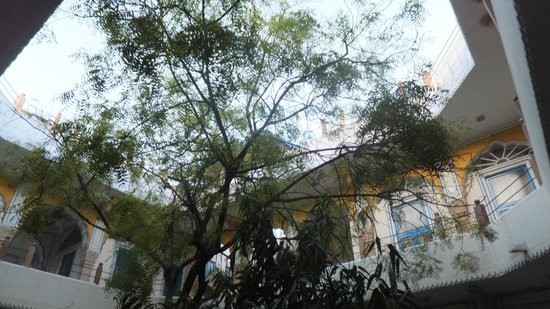 Diggi Palace: The tree in our courtyard
