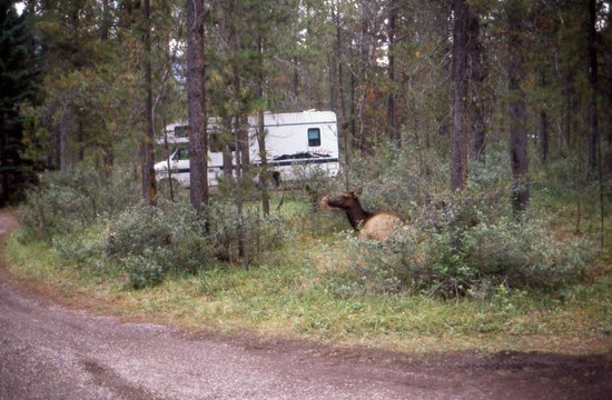 Wapiti Campground Canmore, Alberta  2016 Campground Reviews