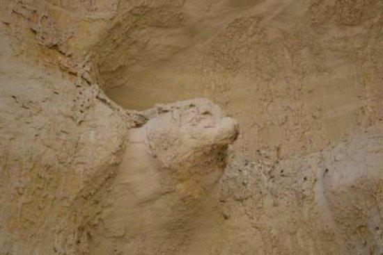 Paria Rimrocks Toadstool Hoodoos: ein Wolf in der Lehmwand