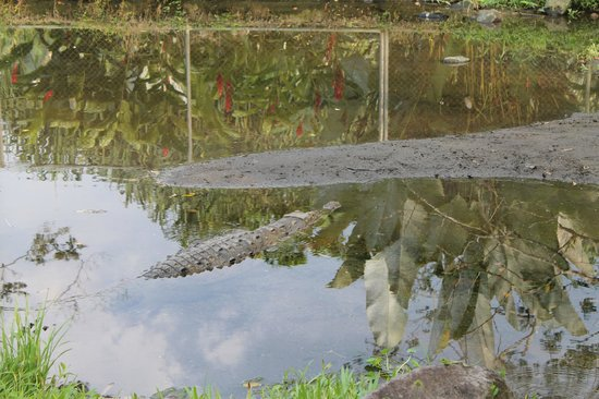 Los Lagos Hotel Spa & Resort: Granja de cocodrilos
