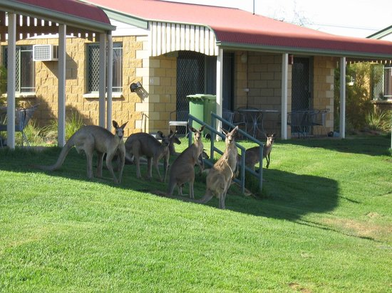 Explorers Caravan Park: Ensuite cabins with occasional kangaroos during summer