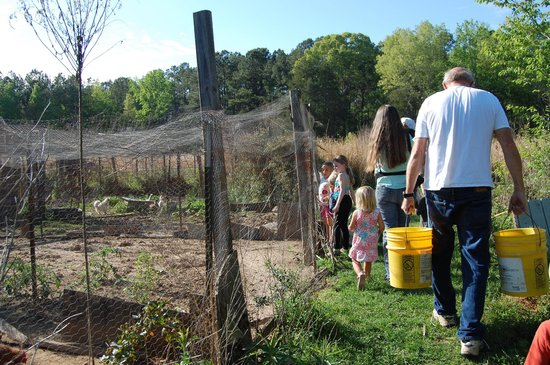 Pitkin, LA: feeding the chickens and gathering eggs with Charles