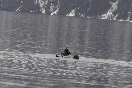 Miller's Landing: Otis (aka Sea Otter)
