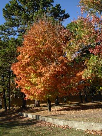 Bear Mountain Log Cabins: Fall Foliage in Eureka Springs