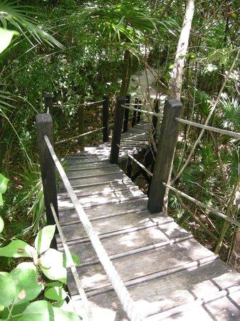 Xanadu Island Resort: The 2-story catwalk in the nature preserve.