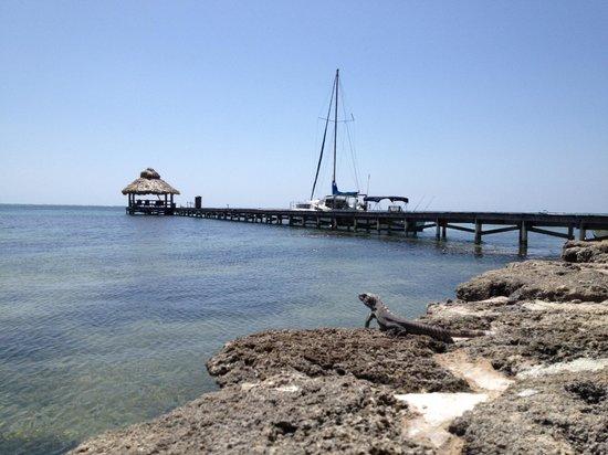 Xanadu Island Resort: Iguana and pier